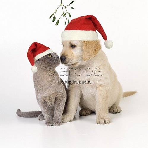 Dog kitten and puppy nose to nose under mistletoe wearing christmas
